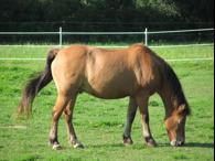 Rescued Pony Bomber