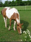 Rescued Pony Elf