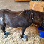 Rescued Pony Lucy