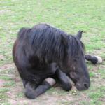Rescued Pony Ruben