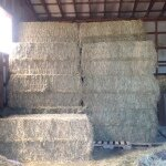Hay - Large Amount
